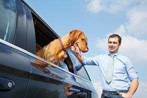 Möchten Hundebesitzer ihr Auto gewinnbringend verkaufen, ist eine Ozonbehandlung anzuraten.