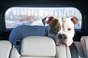Gerüche neutralisieren im Auto: Vor allem für Hundebesitzer von Bedeutung.